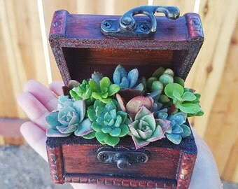 Small wooden treasure box filled with succulents