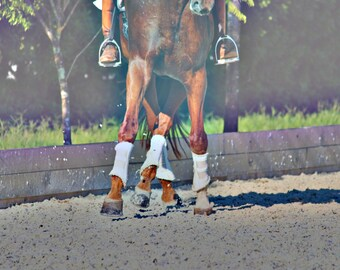 Dressage Horse Print 8 x 10