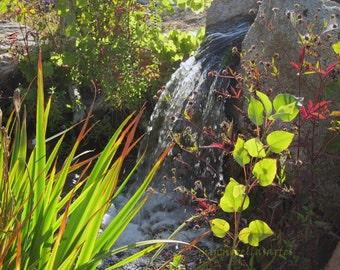 Waterfall in Summer