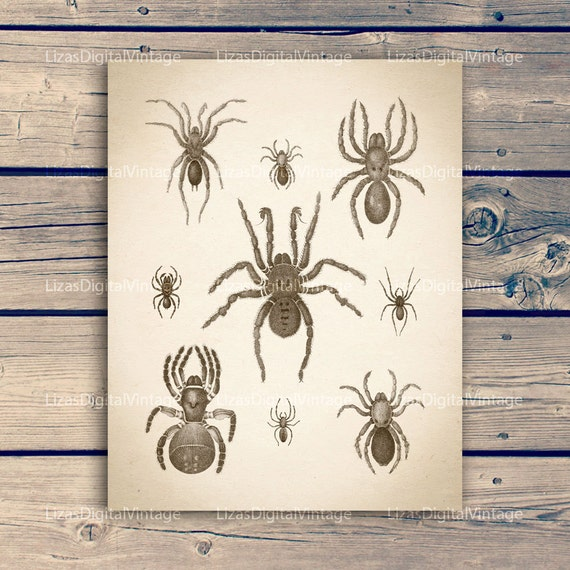 "Spider print, Antique insect print, Insect print vintage, Spider wall art, Insect illustration, Instant download art, 11""x14""; 8""x10"" 300dpi"