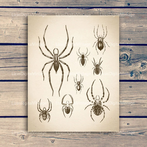 Digital artwork, Insect artwork, Insect art vintage, Spider art, Antique print, Download art, Spider printable, 11x14 print; 8x10 print