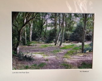 "Woodland Scene, Forest Photography, Norfolk Nature, Signed Limited Edition A4 Landscape Color Photograph 40cm x 30cm (16"" x 12"") Mount"