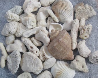 Dry coral stone & Shells