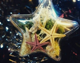 Starfish and shark teeth star shaped Christmas tree bauble taxidermy, stocking filler, secret Santa.