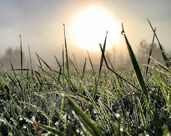 Grass with Dew A6 Greeting Card
