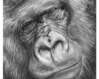 Gorilla (Mounted Print)