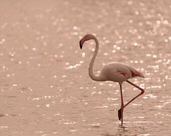 Postcard_035 - Pink flamingo (A6, blanco)