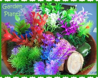 Fairy Garden Plants (Set of 5)