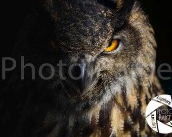 Great Horned Owl, Owl Photography, Owl Photos
