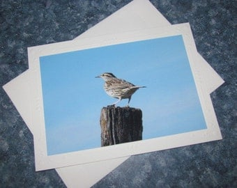Handmade Note Card Eastern Meadowlark Photo