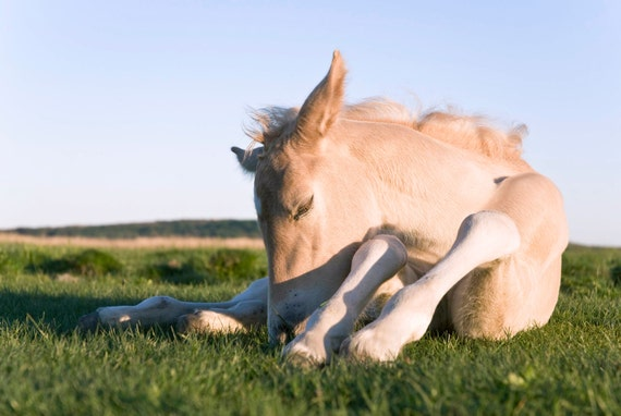 NEWBORN. horse print, foal picture, photographic print, limited edition print