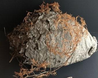 Hornets Nest,Genuine Hornets Nest, Natural Hornets Nest