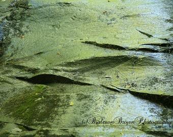 Fern Falls Photograph