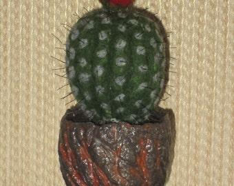 Blooming cactus 1
