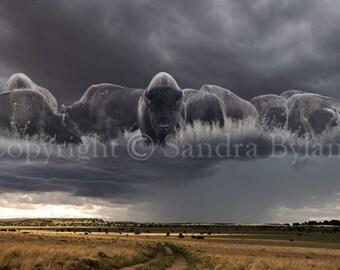 BUFFALO PHOTOGRAPH Bison Photo Fine Art Giclee Print Buffalo Art American Bison Photography Western Art Signed by Artist