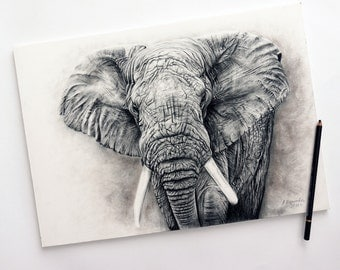 """Free Shipping - Print of Charcoal painting """"Elephant"""""""