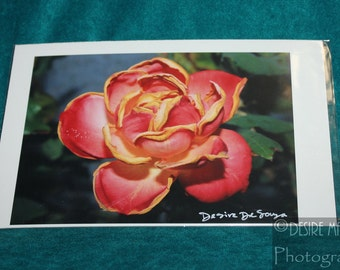 SALE ITEM! Garden Rose - 5 x 7 Original Signed Photo, packaged in plastic sleeve © Desire Marie Photography