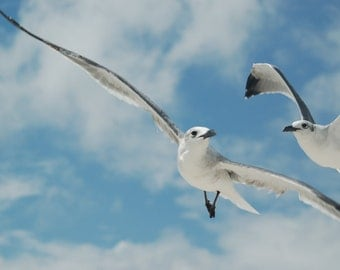 Flying Seagull Photographic Print