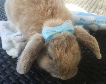 Hair bow / Sparkly bow / Bunny bow for rabbits and small pets.