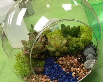 Succulent terrariums made to order
