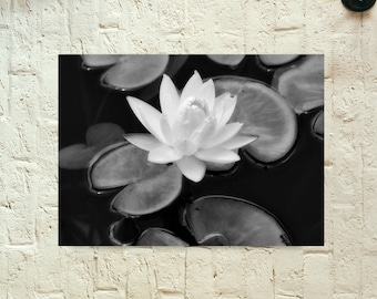 Black and White Lily Pad with Flower