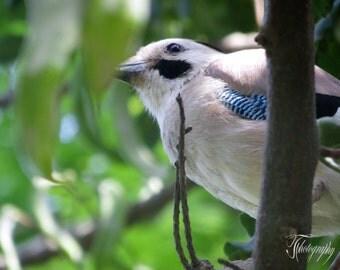 Bird, Blue, Tree