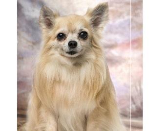 Chihuahua Sitting Smiling Dog Canvas