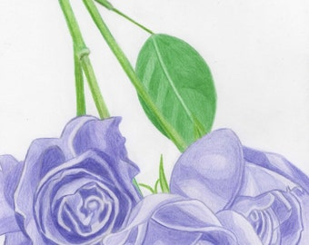 Purple roses drawing