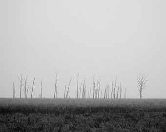Landscape Photo - Misty Landscape - Fields Photo - Trees - Fog - Nature Print - Black and White - Wall Art - Wall Decor - Living Room Decor