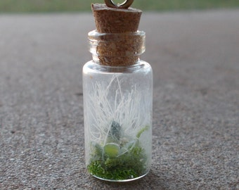 Succulent vial necklace