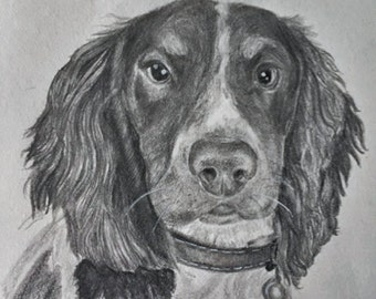 CUSTOM PET DRAWINGS
