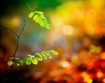 Fall Photography, Magical Autumn Nature Decor, Dreamy Fall Foliage, Zen photo, Warm Colorful Wall Art