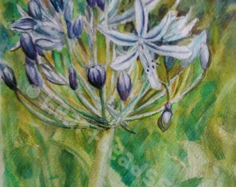 African Lily, flower, wallart, original Watercolor Painting id13700101, 8 by 10, 8x10, not a print, flora fauna