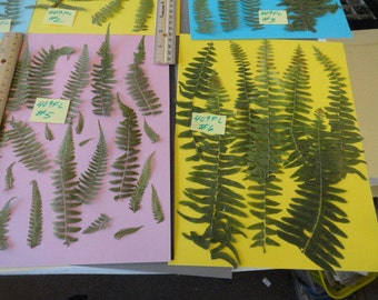 Choose your Real Fern Grown in Alaska Pressed, Preserved, Dried 409 FL