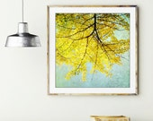 "Yellow wall art | ginkgo tree | lemon yellow leaves | Japanese decor | tree branches | pale blue sky photography print ""Ginkgo"""