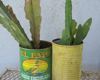 Epiphyllum Orchid Cactus Plant Rooted Cuttings Epi Cutting