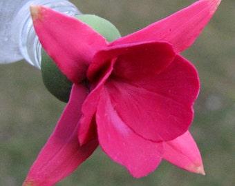 HUMMINGBIRD FEEDER--Fuchsia in Shades of Magenta