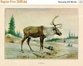 PRINT SALE 20% OFF Vintage 1926 North American Animals  Original Bookplate Illustration, Print, the Caribou, Woodland Animals, Natural Habit