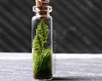 Live Fern Moss Terrarium Bottle Necklace