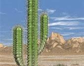 Custom Cactus Ornament