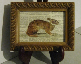 Brown Rabbit Framed Print on Vintage Dictionary Page