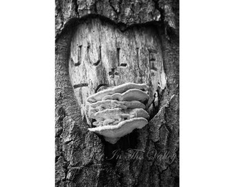Woodland Photograph, Rustic Decor, Mushroom Print, Valentines Heart, Tree Photo, Fine Art Photography, Rustic Home Decor, New England, Grey