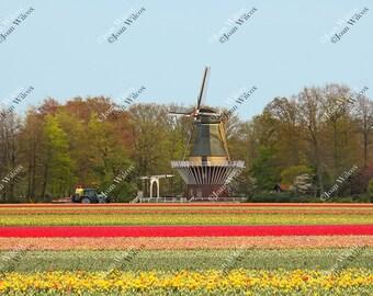 Tulip Field & Windmill Keukenhof Gardens Lisse Holland Netherlands Tractor Bridge Dutch Countryside Fine Art Photography Wall Photo Print