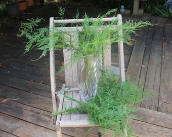 Plumosus Fern-18 stems of Preserved Soft and whispy wedding ferns-Plumosa fern-green ferns-floral decor