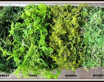 BULK Moss- 1 1/2  pounds of REAL moss in 5 styles-Basket moss-Preserved Sphagnum Moss-Wedding Decor-Woodland moss