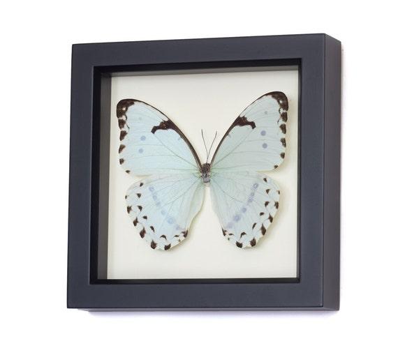 Pale Mint Morpho Butterfly Framed Butterfly Display
