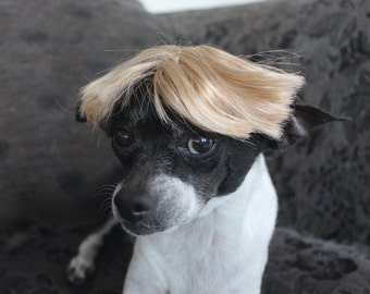 Hillary  Pet   wig for dog or cat