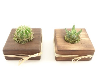 25 Succulent, Cactus, Haworthia, Air Plant WEDDING EVENT Wood Guest Favors - Natural, Rustic, Organic - Baby Shower, Bridal Shower, Birthday