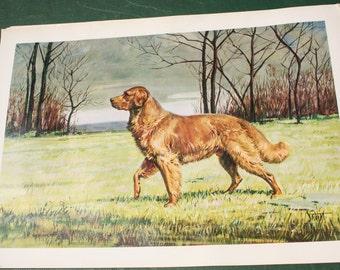 Vintage Golden Retriever Print