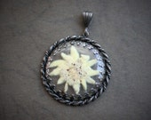 Large Antique Bavarian Edelweiss Pendant / Real Swiss Pressed Flower Jewelry /